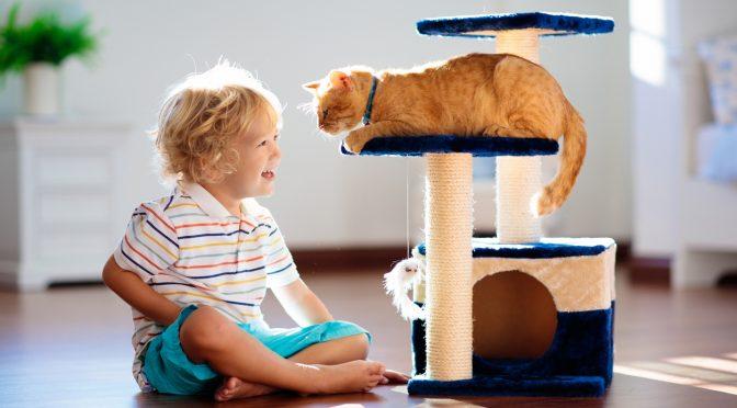 un arbre à chat